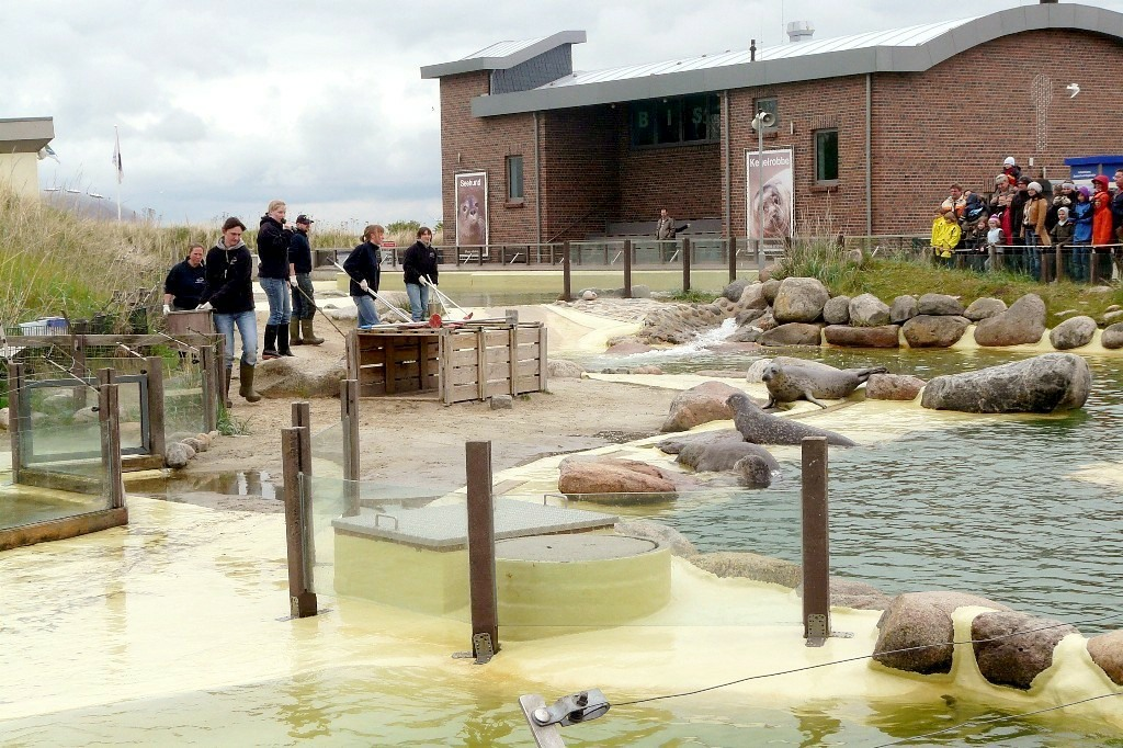 Friedrichskoog Seehundstation Robben Heuler